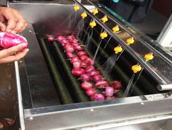 Onion Vegetable and Fruit Washing Machine