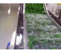Why Choose Bubble Commercial Vegetable Washing Machine?